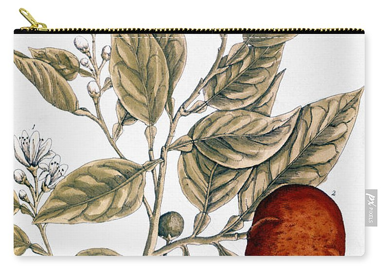1730s Carry-all Pouch featuring the photograph Orange Tree, 1735 by Granger