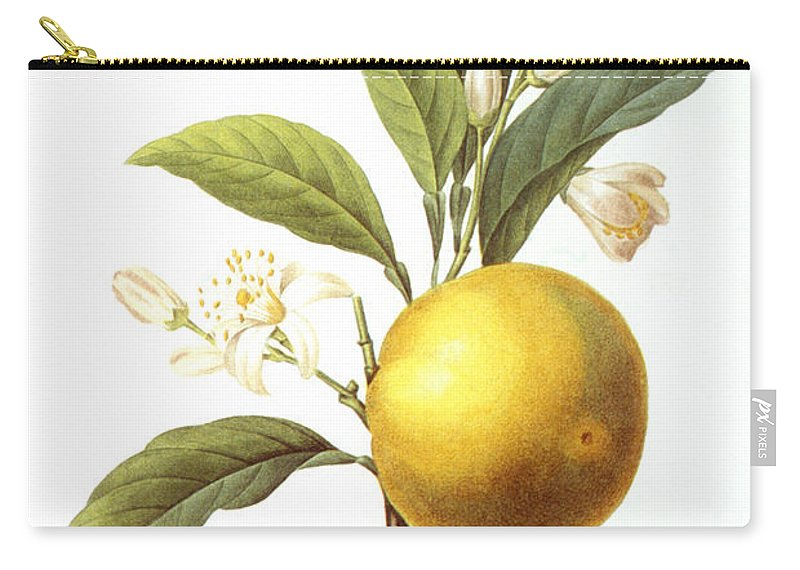 Biology Carry-all Pouch featuring the photograph Orange Tree by Granger