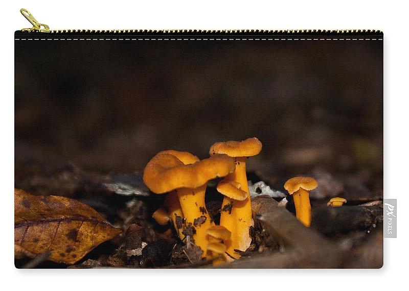 Mushroom Carry-all Pouch featuring the photograph Orange Woodland Mushrooms by Douglas Barnett