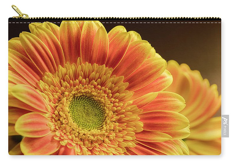 Yellow Carry-all Pouch featuring the photograph Orange Yellow Gerbera by Darlene Munro
