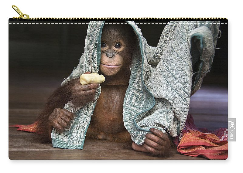 00486841 Carry-all Pouch featuring the photograph Orangutan 2yr Old Infant Holding Banana by Suzi Eszterhas