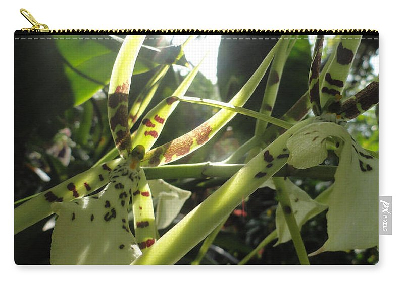 Orchid Carry-all Pouch featuring the photograph Orchid Light by Trish Hale