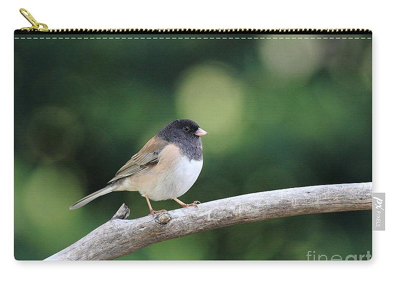 Wildlife Carry-all Pouch featuring the photograph Oregon Junco by Wingsdomain Art and Photography