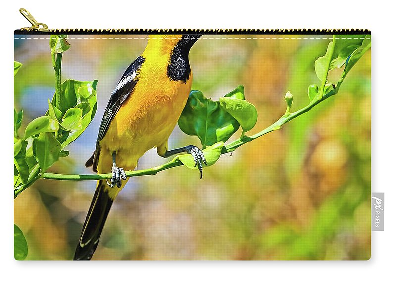Hooded Oriole Carry-all Pouch featuring the photograph Oriole by Edita De Lima