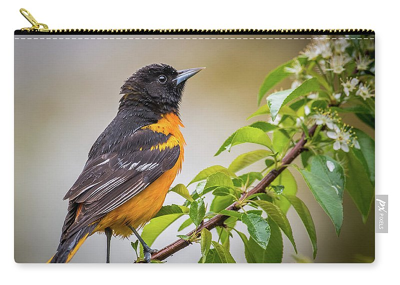 Oriole Carry-all Pouch featuring the photograph Oriole by Paul Freidlund