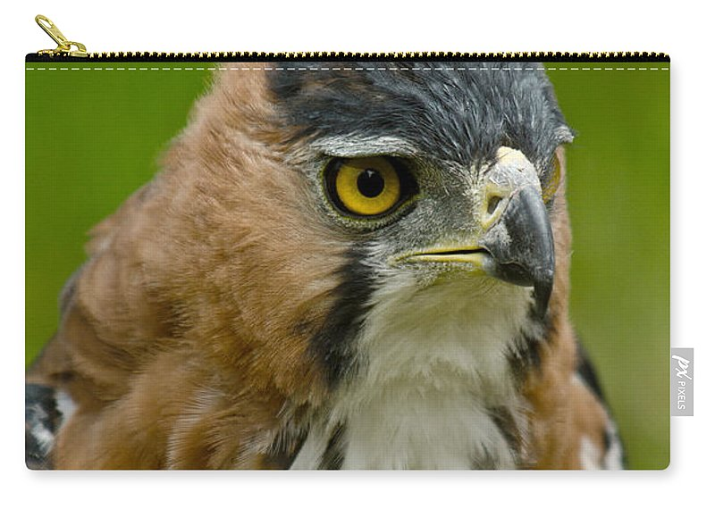 Ornate Hawk-eagle Carry-all Pouch featuring the photograph Ornate Hawk Eagle by Dant� Fenolio