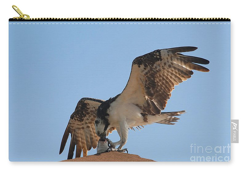 Osprey Carry-all Pouch featuring the photograph Osprey by David Lee Thompson