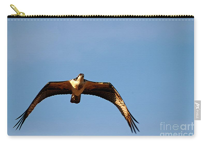 Clay Carry-all Pouch featuring the photograph Osprey In Flight by Clayton Bruster