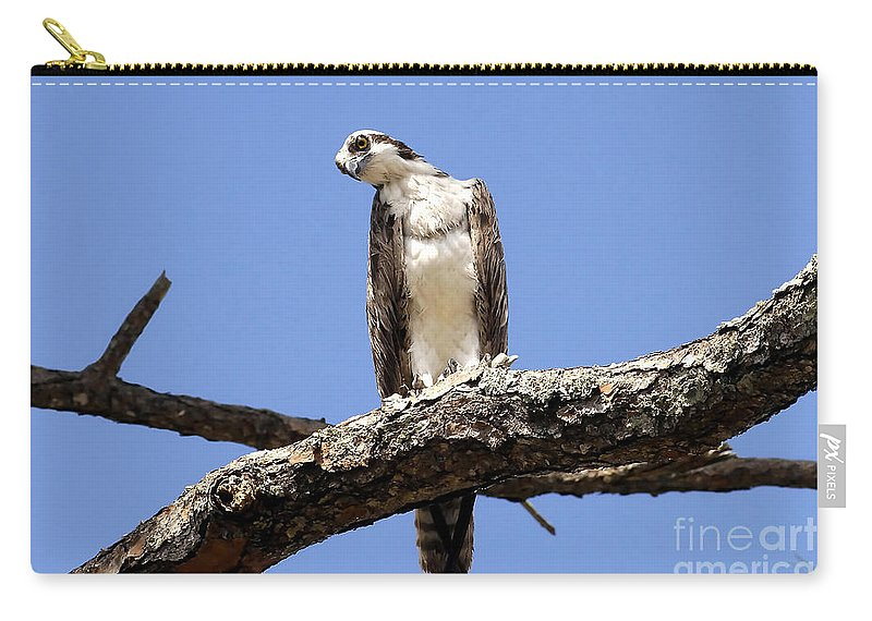 Osprey Carry-all Pouch featuring the photograph Osprey In The Trees by David Lee Thompson