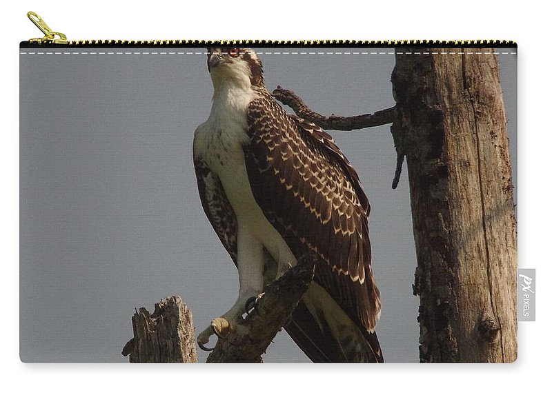 Immature Osprey Carry-all Pouch featuring the photograph Osprey by John Adams