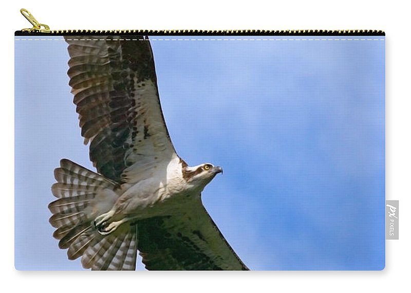 Osprey Carry-all Pouch featuring the photograph Osprey by Randall Ingalls