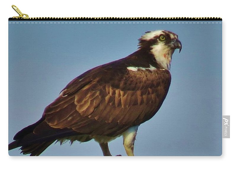 Osprey Carry-all Pouch featuring the photograph Osprey With His Catch by Mel Manning