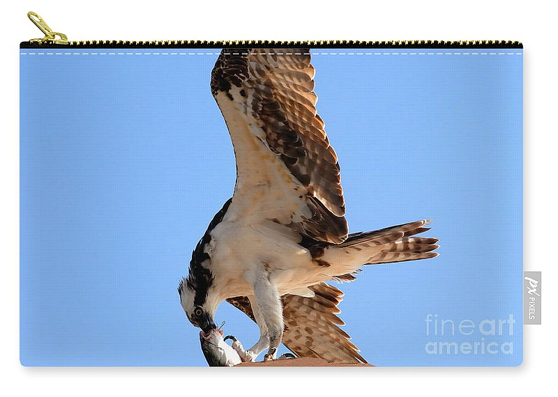 Osprey Carry-all Pouch featuring the photograph Osprey's Catch by David Lee Thompson