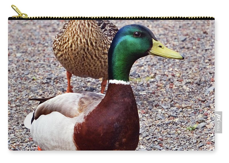 Mallard Drake Carry-all Pouch featuring the photograph Out For A Walk by Randall Ingalls