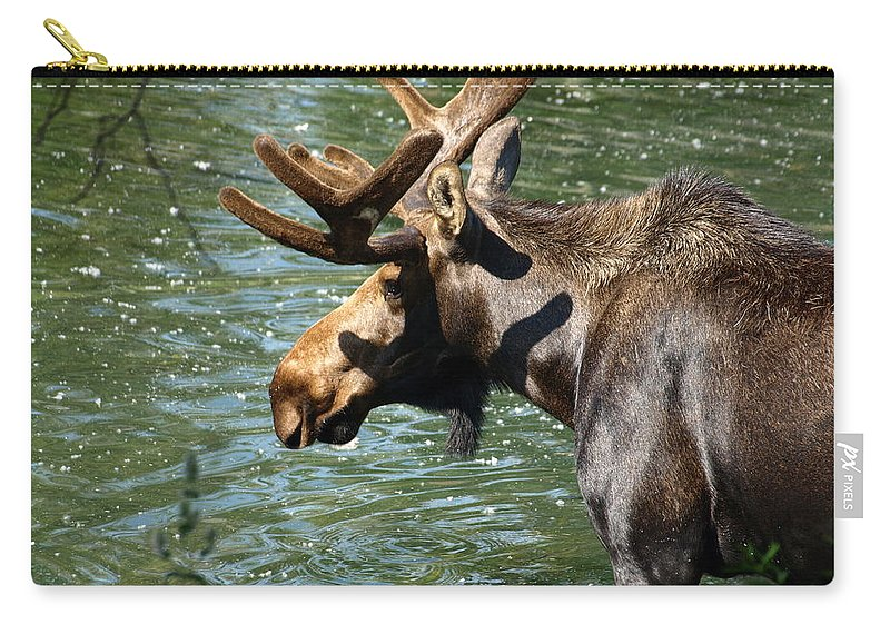 Wildlife Carry-all Pouch featuring the photograph Out For Lunch by DeeLon Merritt