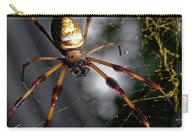 Spider Carry-all Pouch featuring the photograph Out Of The Dark by Christopher Holmes