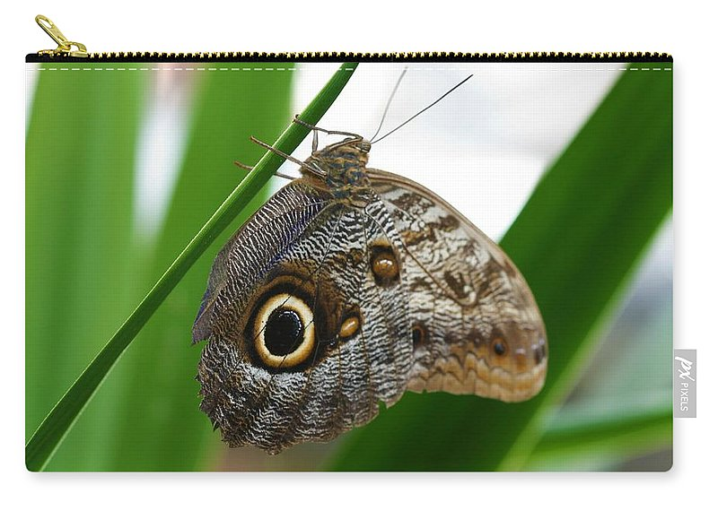 Butterfly Carry-all Pouch featuring the photograph Owl Butterfly by Kristina Jones