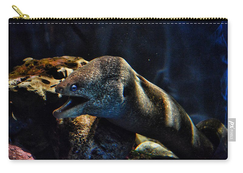 Eel Carry-all Pouch featuring the photograph Pacific Moray Eel by Tommy Anderson
