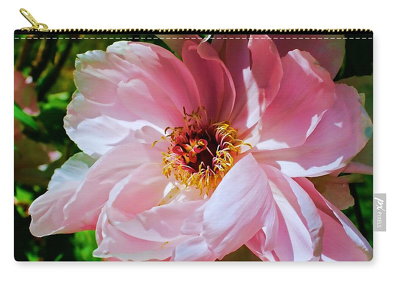 Peony Carry-all Pouch featuring the photograph Painted Velvet Petals by Mike Smale