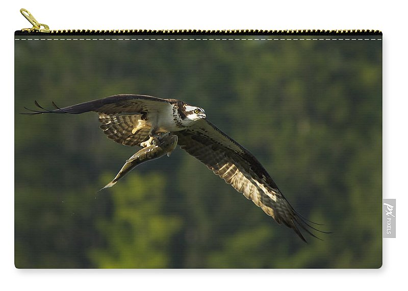 Osprey Carry-all Pouch featuring the photograph Pandion Haliaetus by Mircea Costina Photography
