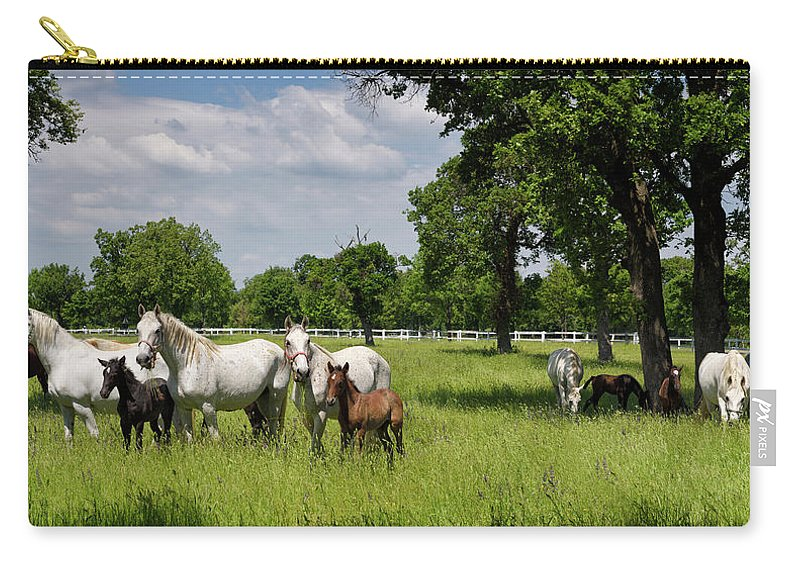 Herd Carry-all Pouch featuring the photograph Panorama Of White Lipizzaner Mare Horses With Dark Foals Grazing by Reimar Gaertner