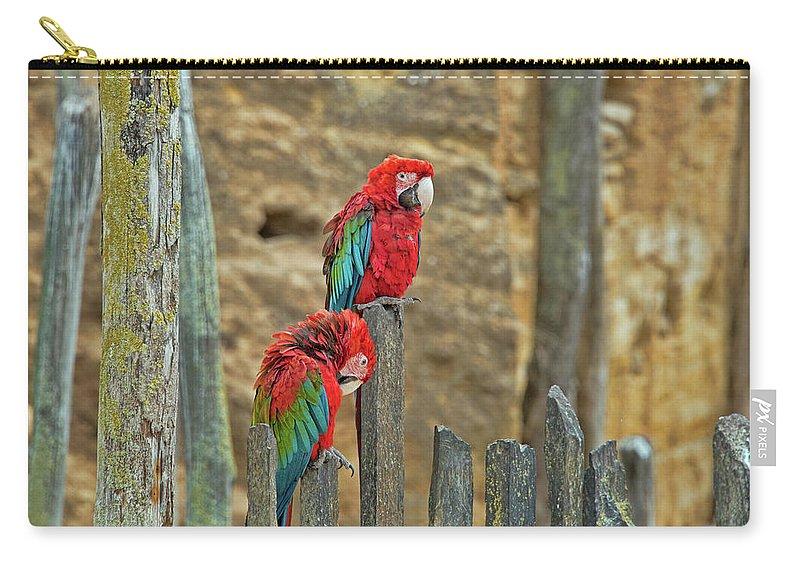 Parrots Carry-all Pouch featuring the photograph Parrots, Doue-la-fontaine Zoo, Loire, France by Curt Rush
