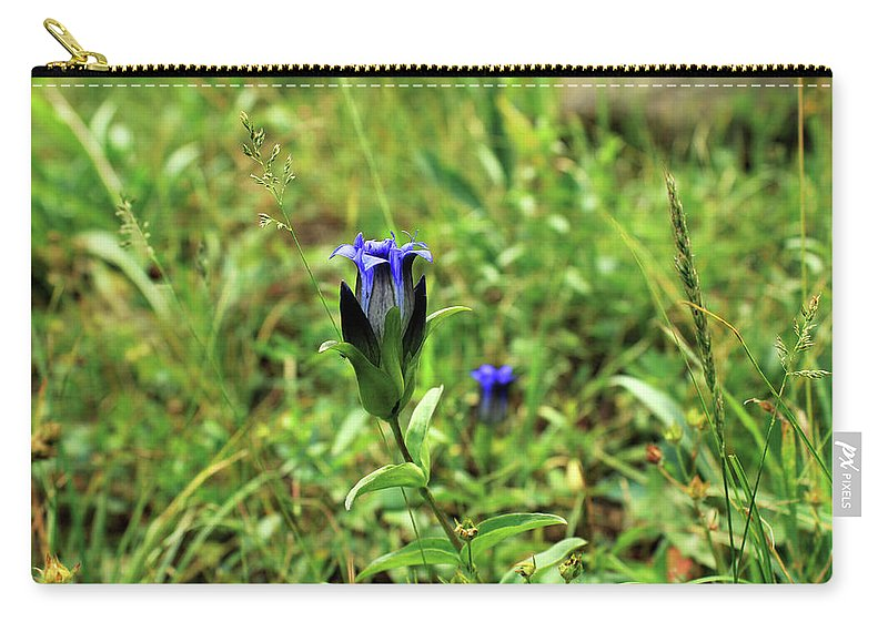 Parry's Mountain Gentian. Flowers Carry-all Pouch featuring the photograph Parry's Mountain Gentian by James Pell