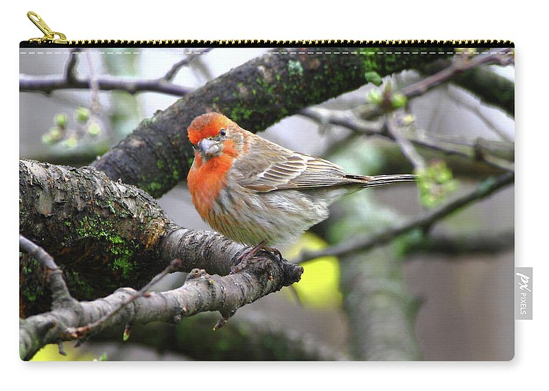 House Finch Carry-all Pouch featuring the photograph Partial-migrator House Finch by Herbert L Fields Jr