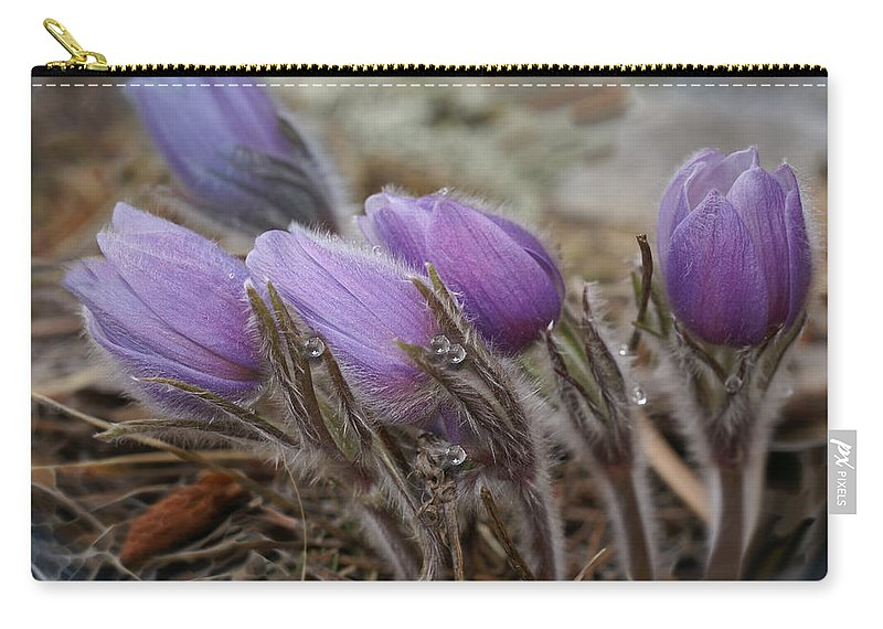 Pasque Flower Carry-all Pouch featuring the photograph Pasque Flower Watercolor by Heather Coen