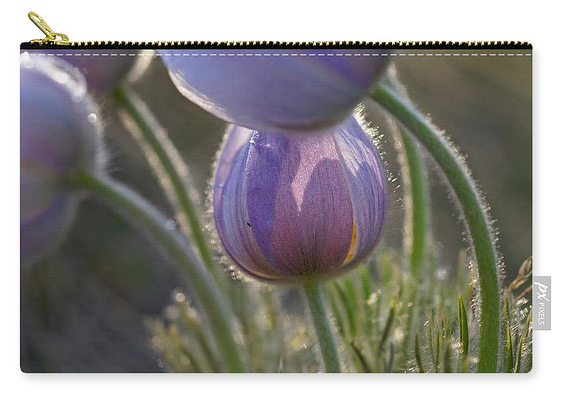 Pasque Carry-all Pouch featuring the photograph Pasque Shadows by Heather Coen