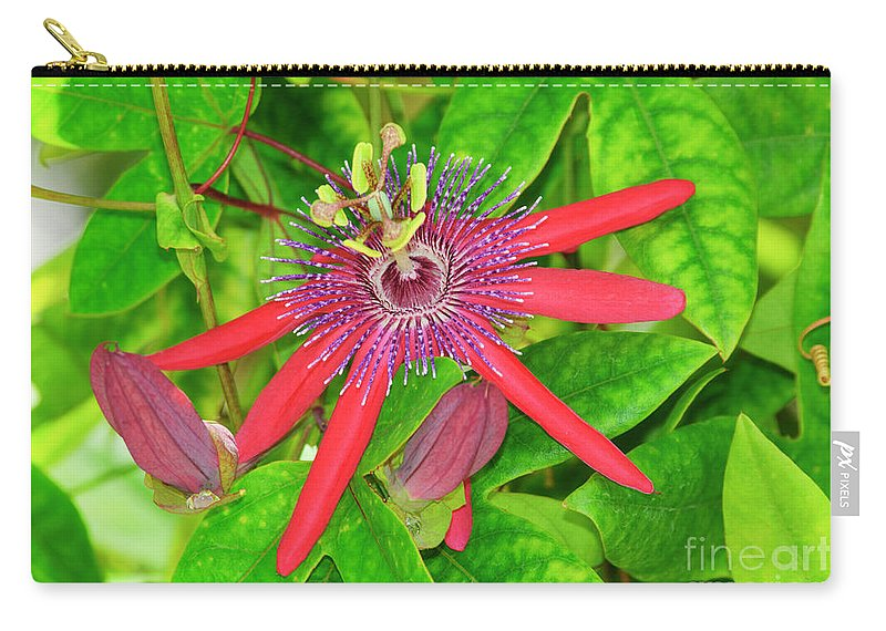 Passiflora Carry-all Pouch featuring the photograph Passiflora by Genevieve Vallee