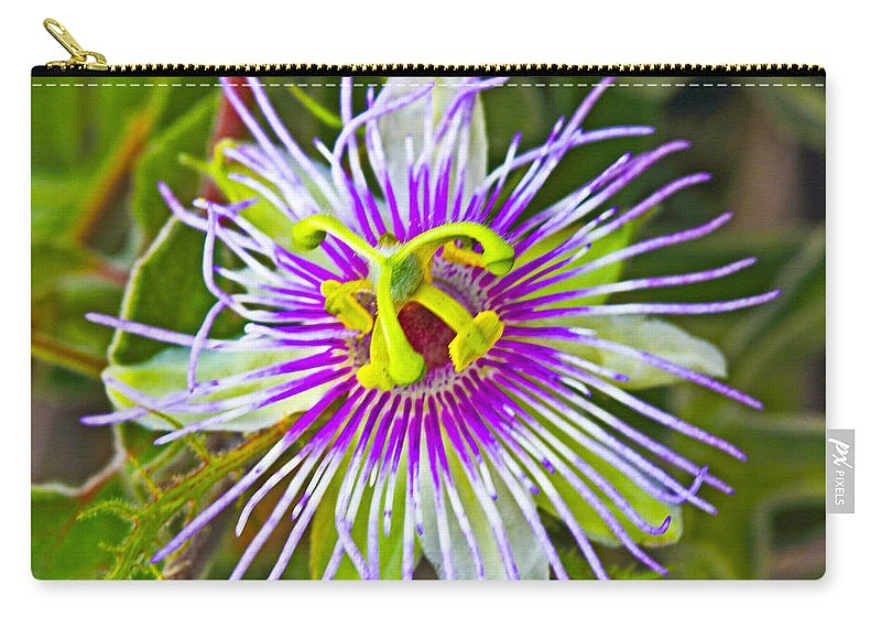 Passionflower Carry-all Pouch featuring the photograph Passion Flower by Edita De Lima