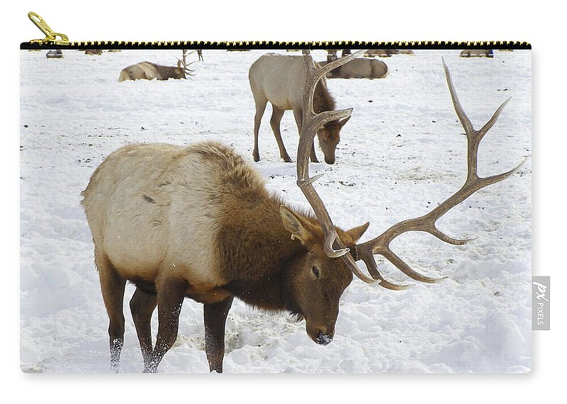 Elk Carry-all Pouch featuring the photograph Pawing For Food by DeeLon Merritt
