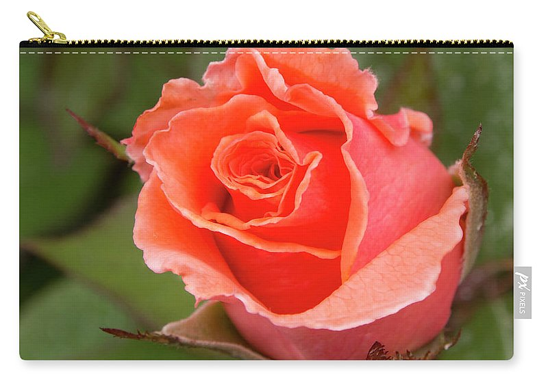 Jean Noren Carry-all Pouch featuring the photograph Peachy Rose by Jean Noren