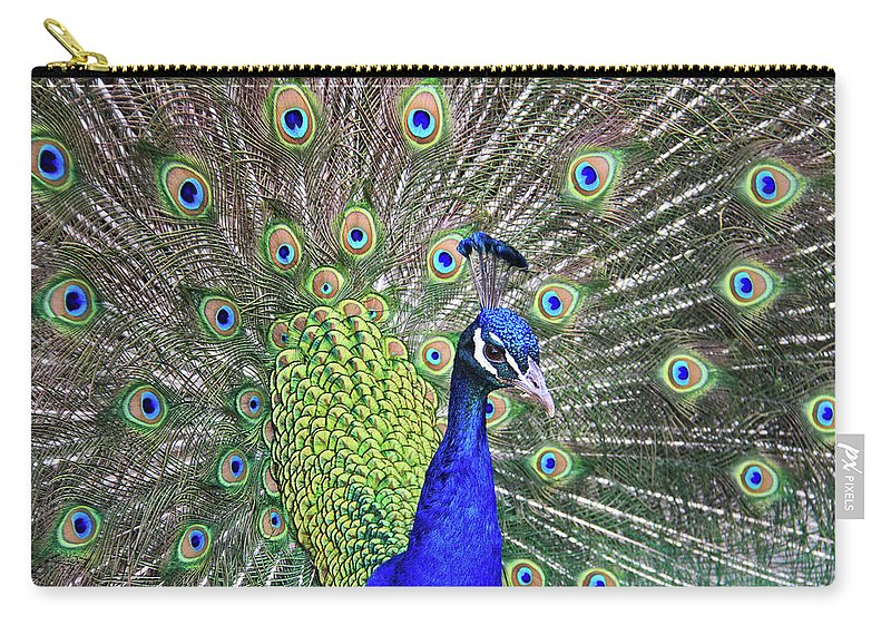 Peacock Carry-all Pouch featuring the photograph Peacock Colors by Scott Mahon
