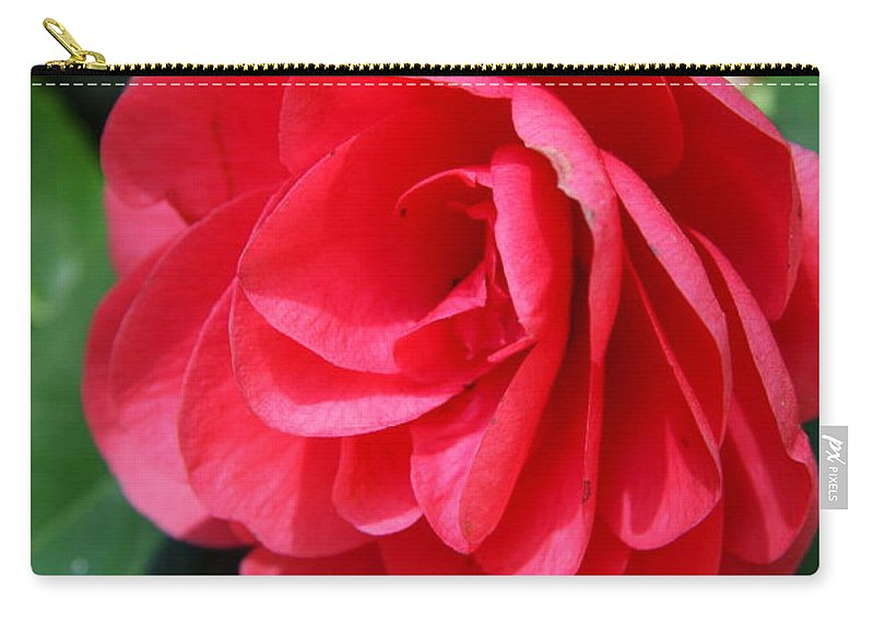 Camellia Carry-all Pouch featuring the photograph Pearl Of Beauty - Red Camellia by Christiane Schulze Art And Photography