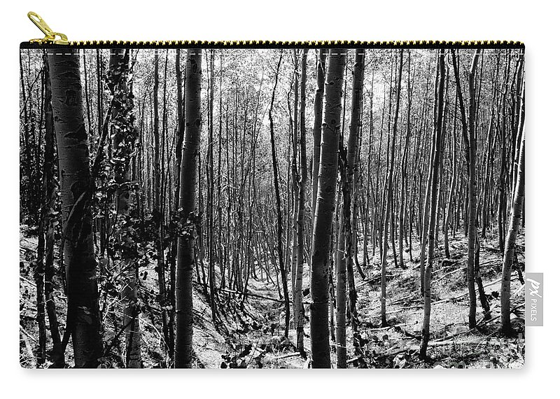 Pecos National Forest Carry-all Pouch featuring the photograph Pecos Wilderness by David Lee Thompson