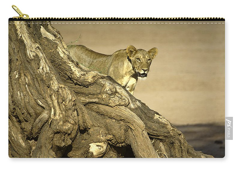 Africa Carry-all Pouch featuring the photograph Peeking Out by Michele Burgess
