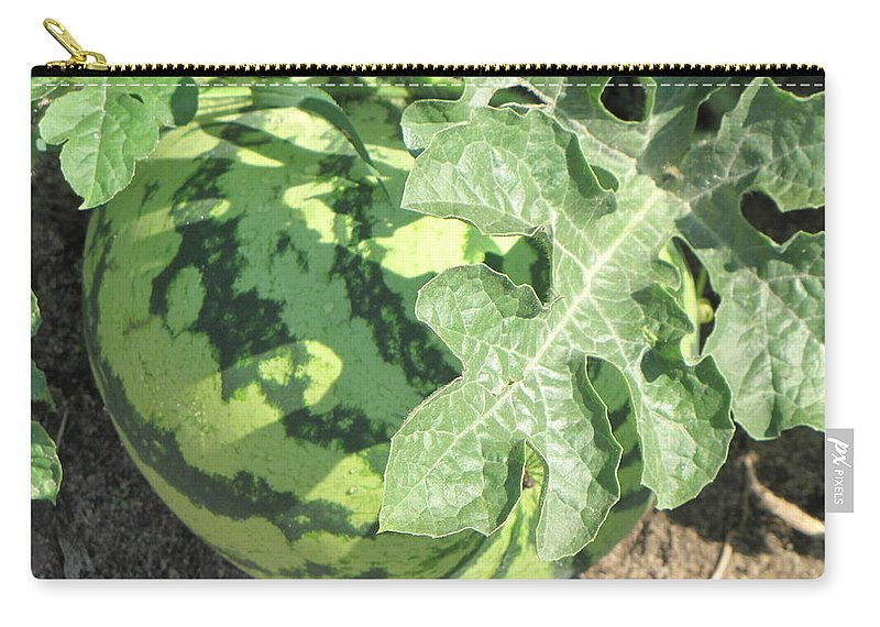 Watermelon Carry-all Pouch featuring the photograph Peeking Watermelon by Pam Davis