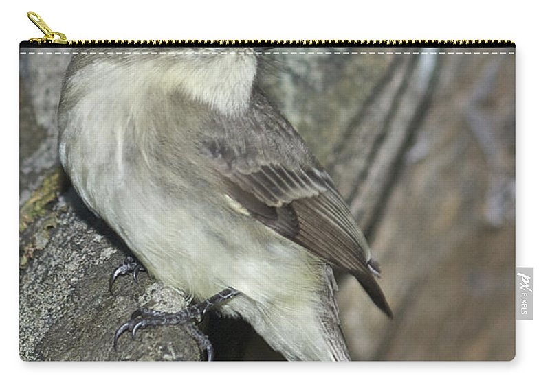 Eastern Wood Peewee Carry-all Pouch featuring the photograph Peewee by Michael Peychich