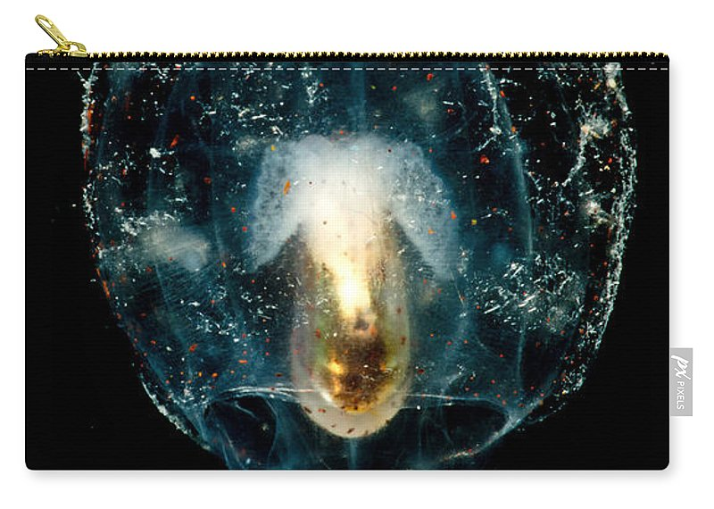Bolitaenidae Carry-all Pouch featuring the photograph Pelagic Octopus by Dant� Fenolio