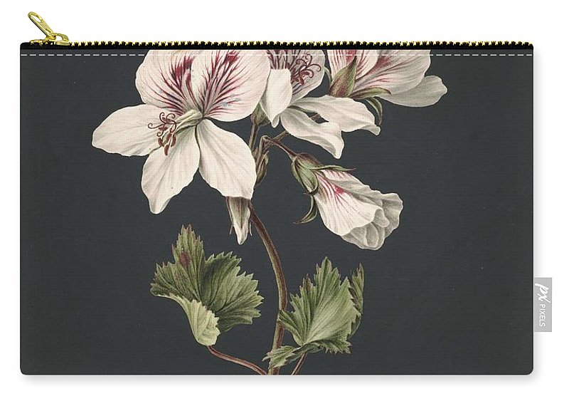 Flower Carry-all Pouch featuring the painting Pelargonium Album Bicolor, M De Gijselaar 1830 by M de Gijselaar