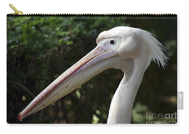 Close Up Carry-all Pouch featuring the photograph Pelican by Danny Yanai