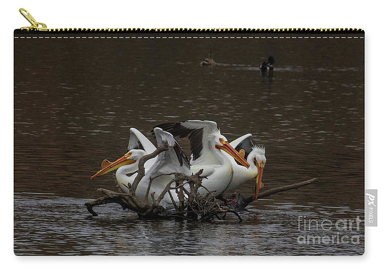 Carry-all Pouch featuring the photograph Pelican Party by Marcia Darby