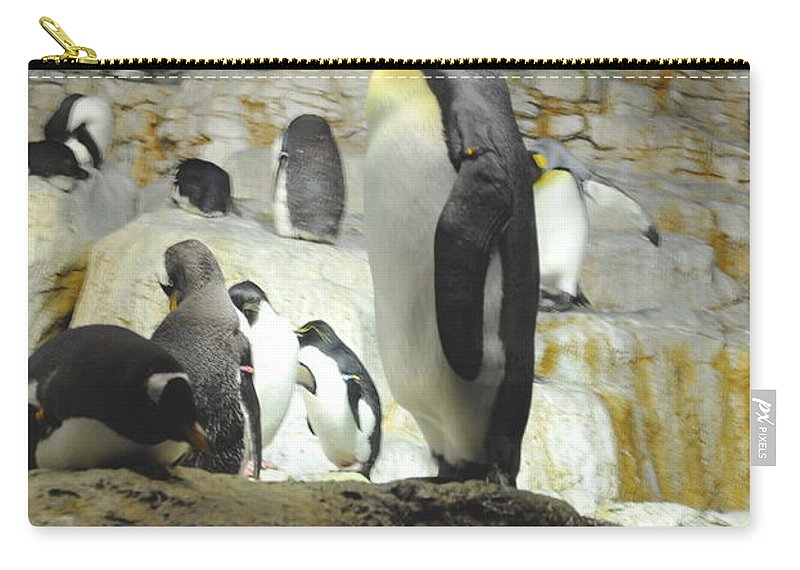 Penguin Carry-all Pouch featuring the photograph Penguin by Jost Houk