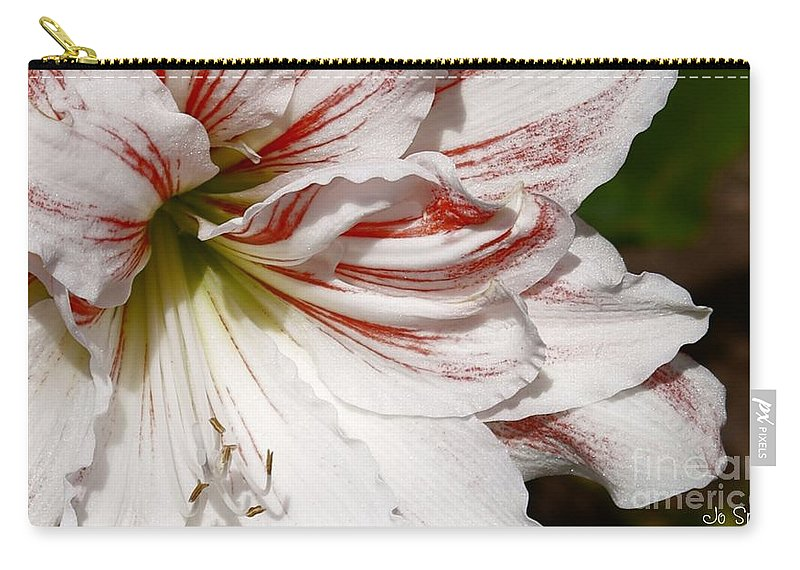 Peppermint Candy Lily Flower Carry-all Pouch featuring the photograph Peppermint Candy by Joanne Smoley