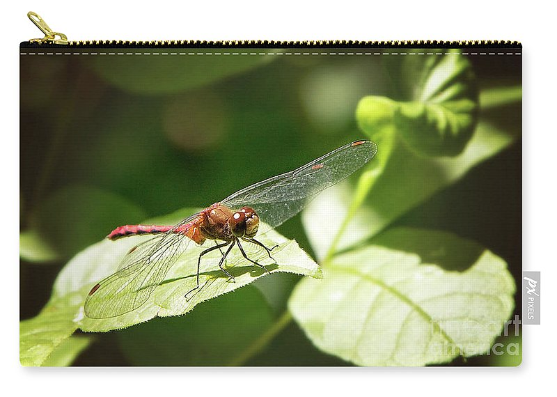 Nature Carry-all Pouch featuring the photograph Perched Dragonfly by Sharon McConnell