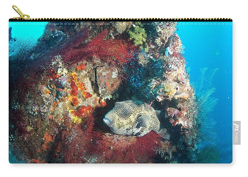 Carry-all Pouch featuring the photograph Perched Out Puffer by Todd Hummel