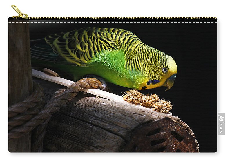 Bird Carry-all Pouch featuring the photograph Perched Parakeet by Marilyn Hunt