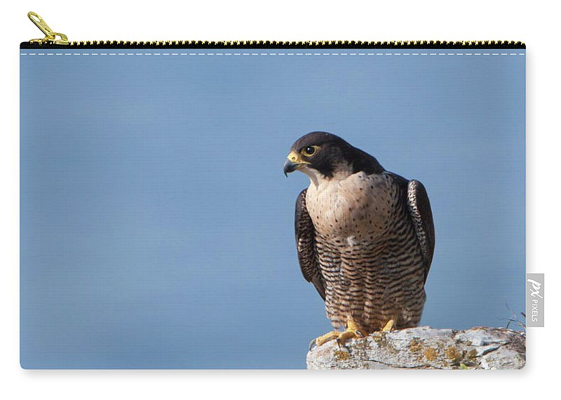 Peregrine Carry-all Pouch featuring the photograph Perched Peregrine Falcon by Peter Walkden